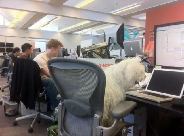 Beast the Dog