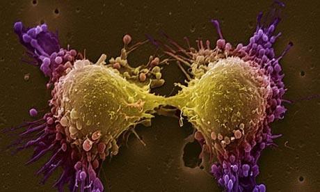 Новое генетическое открытие определяет новые пути для лечения