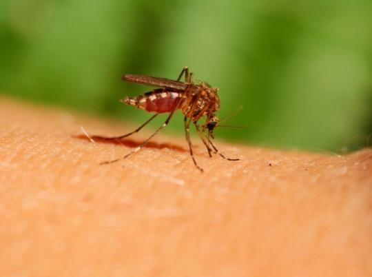 37 Million Dengue Cases In India