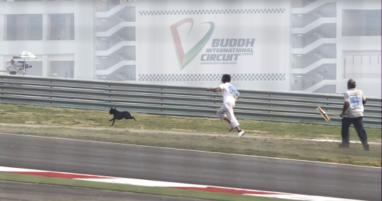 India F1 - Dog Proof