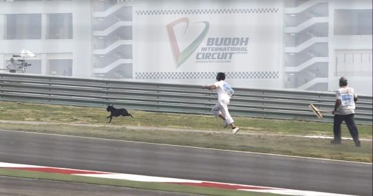 India F1 - Dog Proof