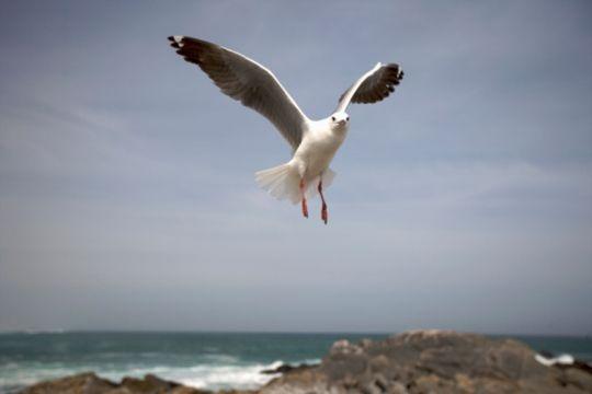 Seagull's favourite