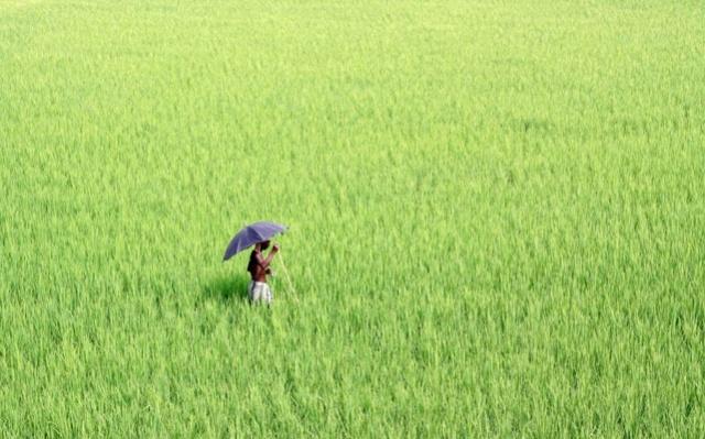 Endangering food security