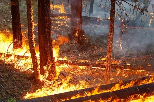 Wildfires Blamed for Blackout in Brazil