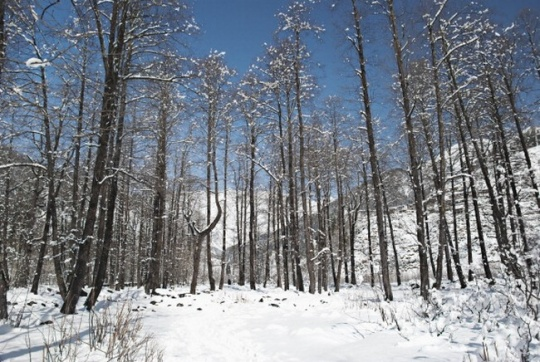 8 Places Where You Can Find Snow In India