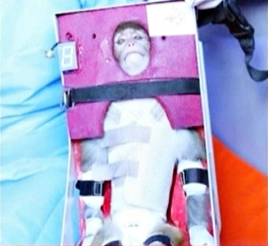 Iran Sends Monkey Into Space