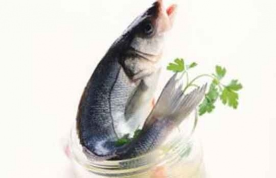 Oily Fish is Best Brain Nutrition