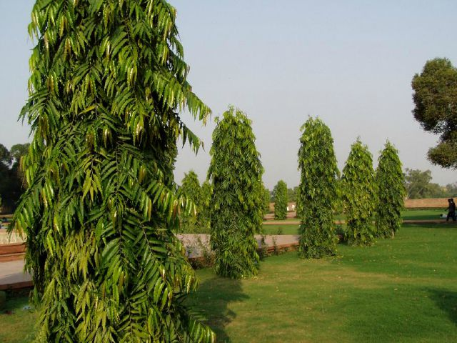 9 Trees That Grow In India And All You Need To Know About ...