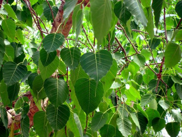 9 Trees That Grow In India And All You Need To Know About