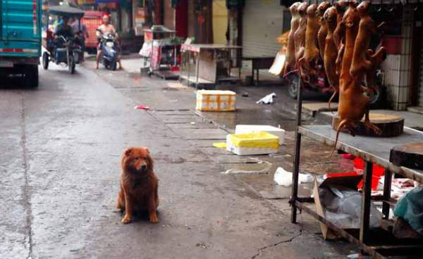Yulin Dog Eating Festival Cancelled