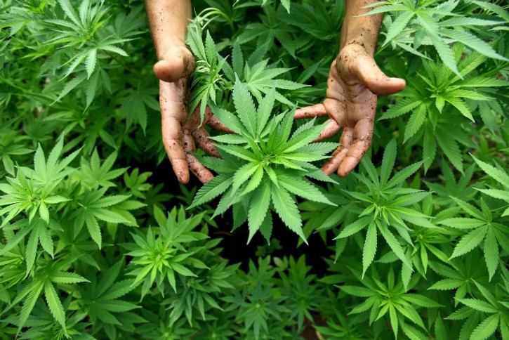 Rural Petaluma Neighbors Challenge Cannabis Industrialization
