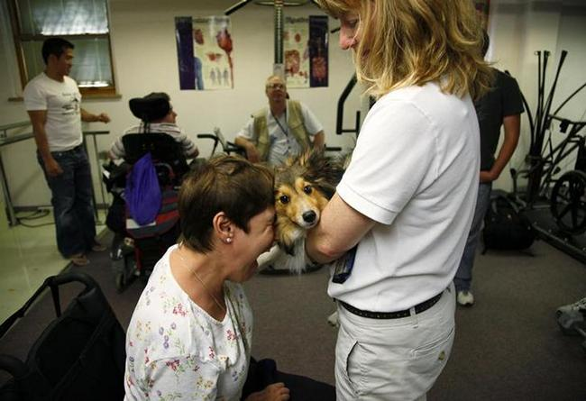 19 animal therapy photos that prove how amazing animals are