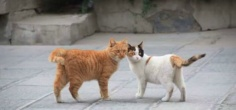 A Win For Humanity, Online Campaign Saves Stray Cats Living In Chinese Museum From Being Evicted
