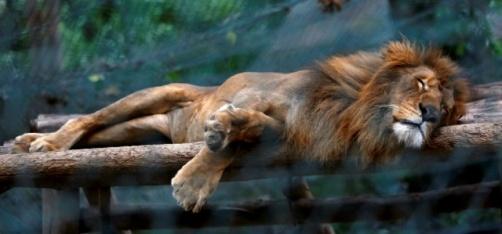 50 Animals Starve To Death As Venezuela Battles Chronic Food Shortage