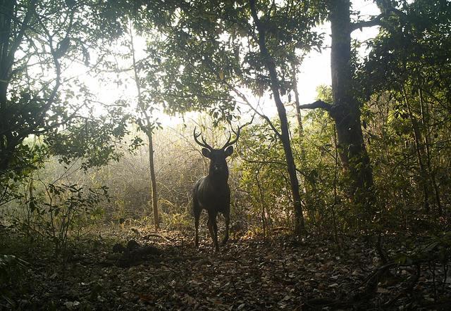 sai sanctuary deer