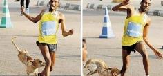 Spectator Stray Dog Joins Bengaluru Marathon, Bites Runner And Costs Him The Race