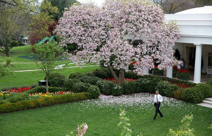 Obama walks across the Rose Garden of the White House.