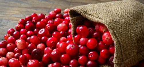 Science Finds A Delicious Way Of Fighting Bacterial Infections, Chomp On Cranberries!