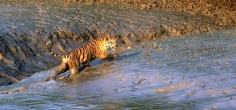UNESCO Urges India, Bangladesh To Relocate Rampal Power Project Which Could Pose A Serious Threat To Sundarbans
