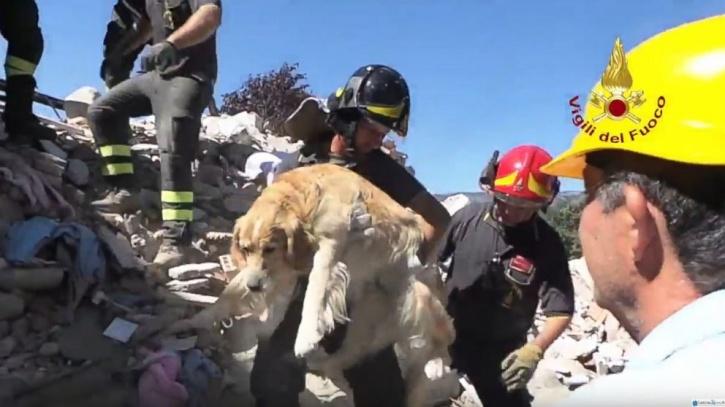 Hasil gambar untuk romeo dog rescue amatrice earthquake