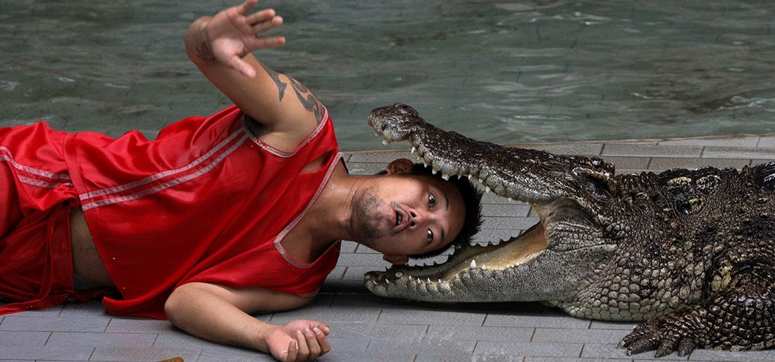 17 Pictures Of World's Biggest Crocodile Farms Equipped ...