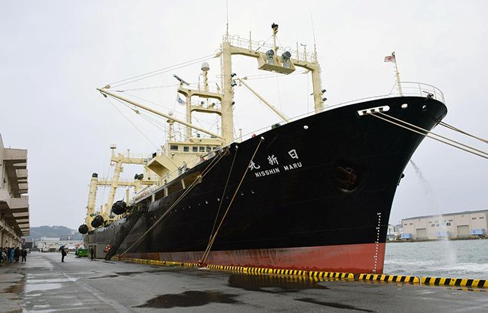 Whales Ship