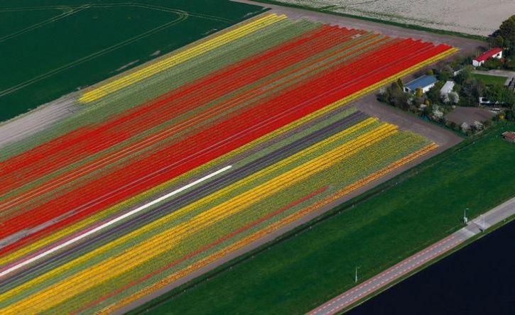 Fields of flowers 3