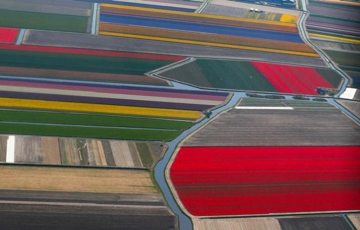 Fields of flowers 5