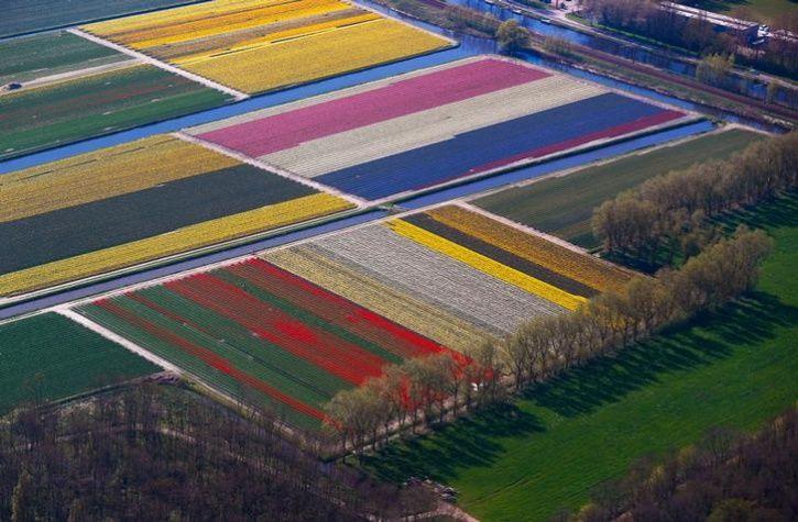 Fields of flowers 7