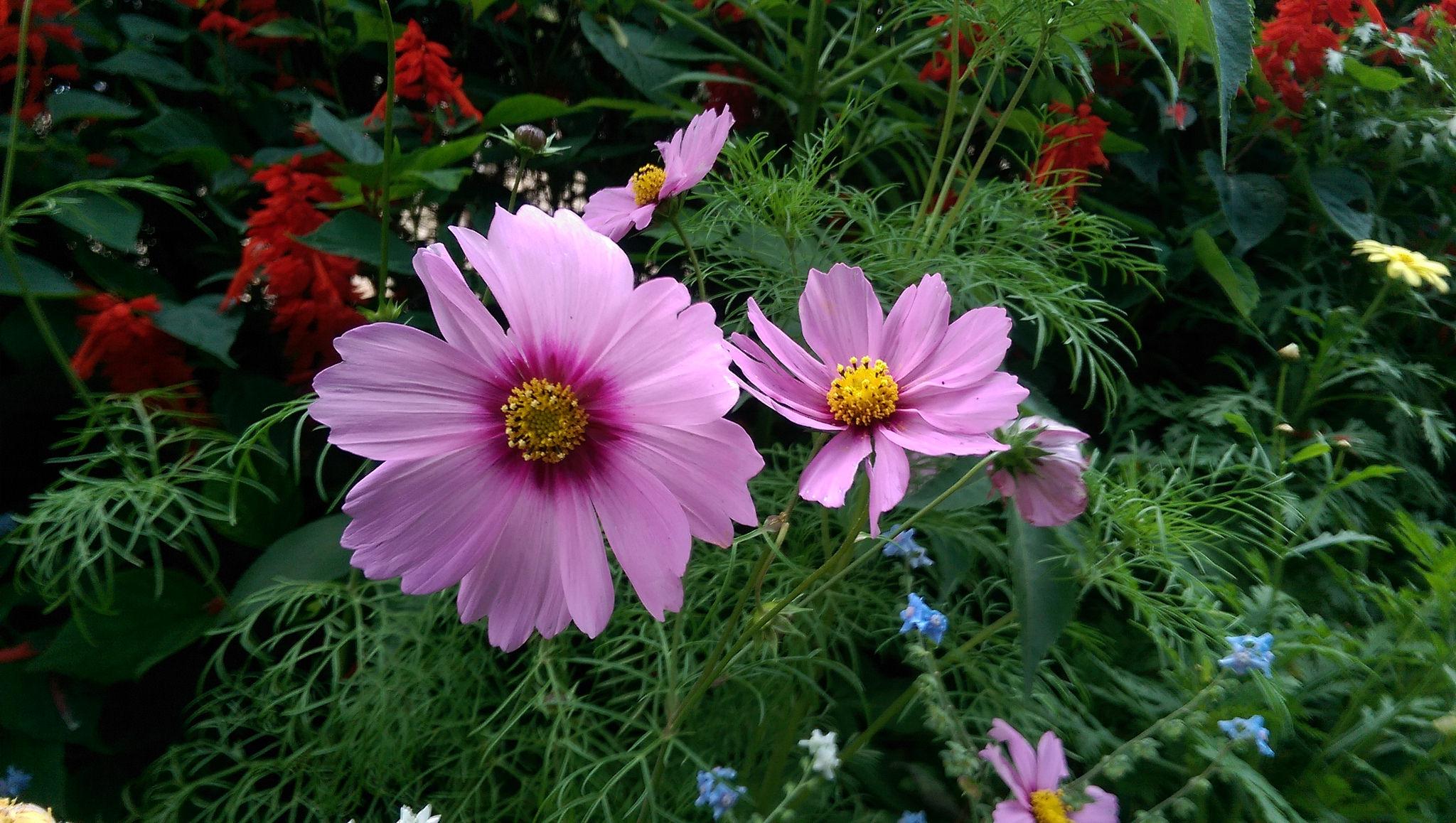 Beautiful Ooty Flower Show Indiatimes