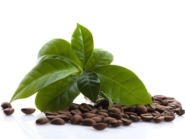 How to reuse tea leaves and coffee grounds healthy living - Coffee grounds six practical ways to reuse them ...