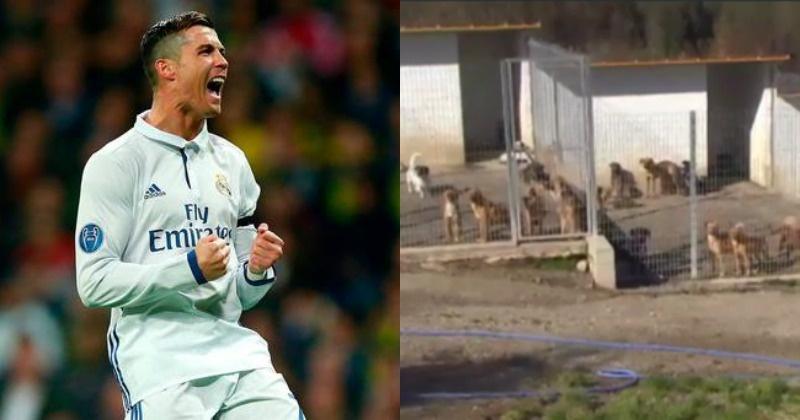 Real Madrid Star Cristiano Ronaldo Helped Portuguese