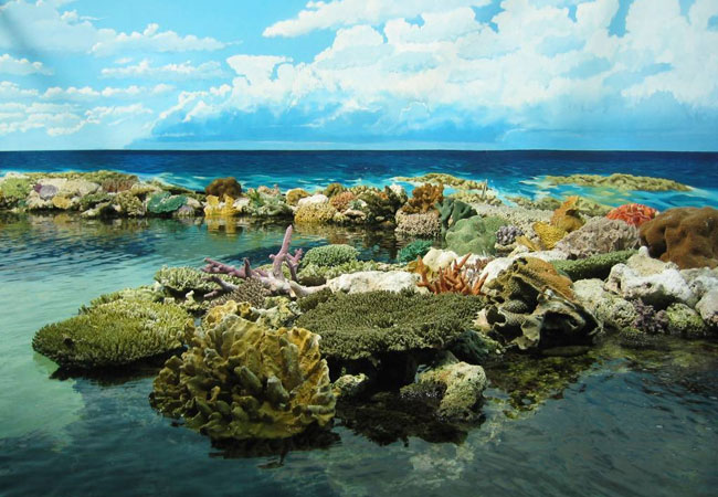 The largest protected marine area in the world, the reef is home to unimaginable numbers of marine wildlife and supports 400 types of coral, more than 1,500 species of fish, 3,000 species of molluscs, 30 species of whales, porpoises and dolphins, 500 species of seaweed, 14 species of sea snakes, 6 species of sea turtles, 215 species of birds and large populations of dugongs.It's also a safe haven to the endangered loggerhead and green sea turtles, and a breeding ground for humpback whales. The Great Barrier Reef is bigger than the Great Wall of China. It can be seen from outer space.