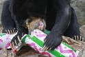 A sun bear unwraps a food treat wrapped up as a Christmas present at Taronga Zoo in Sydney