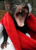 AUSTRALIA-ANIMAL-DEVIL-DISEASE-FILES