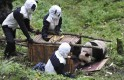 Researchers wait for giant panda Taotao to get into a cage, in Wolong National Nature Reserve