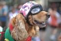 Animal carnival @ Rio