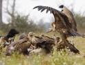 Restaurant for vultures @ Nepal