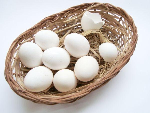 Brown shell eggs are nutritious than white shell eggs.
