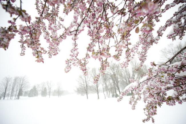 April Storm Dumps Snow Across Northeastern U.S.