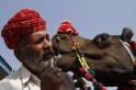 Cattle Carnival at Pushkar