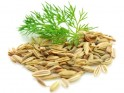 Herbs for Weight Loss # 18: Fennel seeds