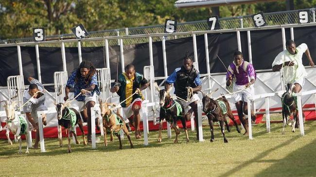 Buccoo Goat and Crab Race