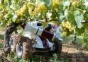 Wall-Ye Wine Robot