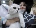 World Cat Exhibition