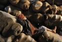 A labourer sleeps on sacks filled with aluminium utensils at a wholesale market in Kolkata