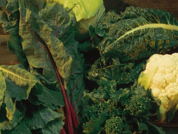 Popeye Power: Spinach