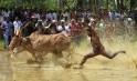 Kakkoor Kalavayal Race in Kochi