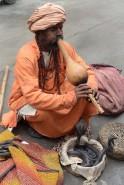INDIA-CHARMER-COBRAS