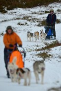 Stunning Aviemore Sled Dog Race